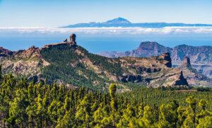 6 actividades relacionadas con la naturaleza en Tenerife y Gran Canaria